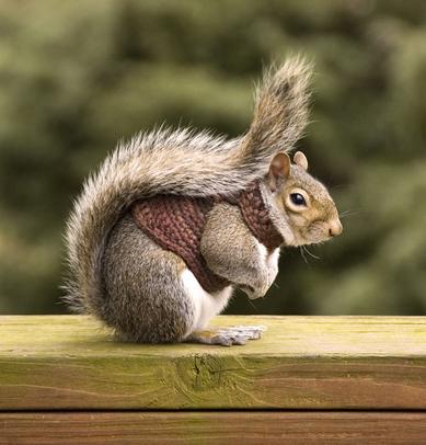 http://broke207.files.wordpress.com/2010/04/squirrel-in-sweater.jpg